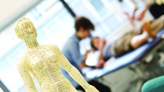 A human anatomy statue
