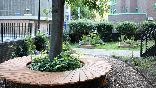 London South Bank University (LSBU) biodiversity garden on campus